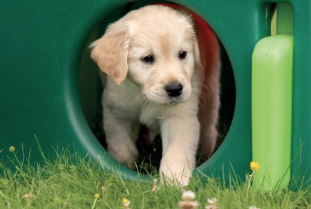 Sponsor a Puppy Kevin