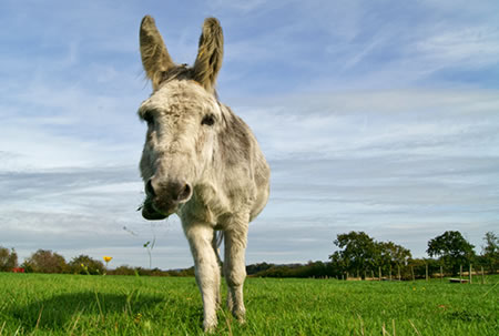 Adopt a Donkey