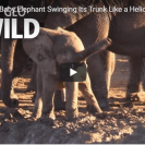 awkward elephant