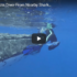 Amazing Footage Of Humpback Protecting Diver From Shark