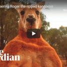 Roger The Boxing Kangaroo Passes Away