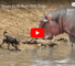 Hippos Are Jerks Check This Video Out And See Why