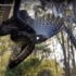 Crazy Video Of Python Devouring Large Bird