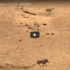 Check Out This Video Of A Superfast Warthog
